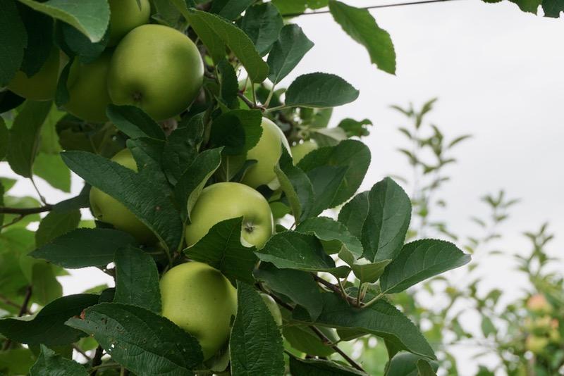Fruitteelt in de omgeving van Tholen