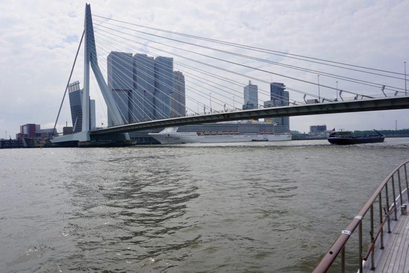 De Erasmusbrug over de Nieuwe Maas in Rotterdam